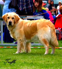 Truffle at Killarney Show in Ireland, August 2013