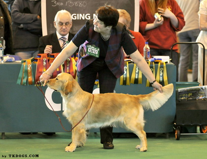 Cherry by TKDogs at Crufts 2009